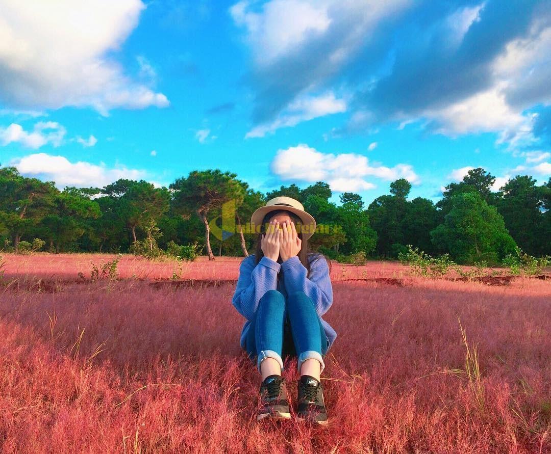 i-hoa-cỏ-lau Những loài hoa đẹp nhất đà lạt vào dịp cuối năm