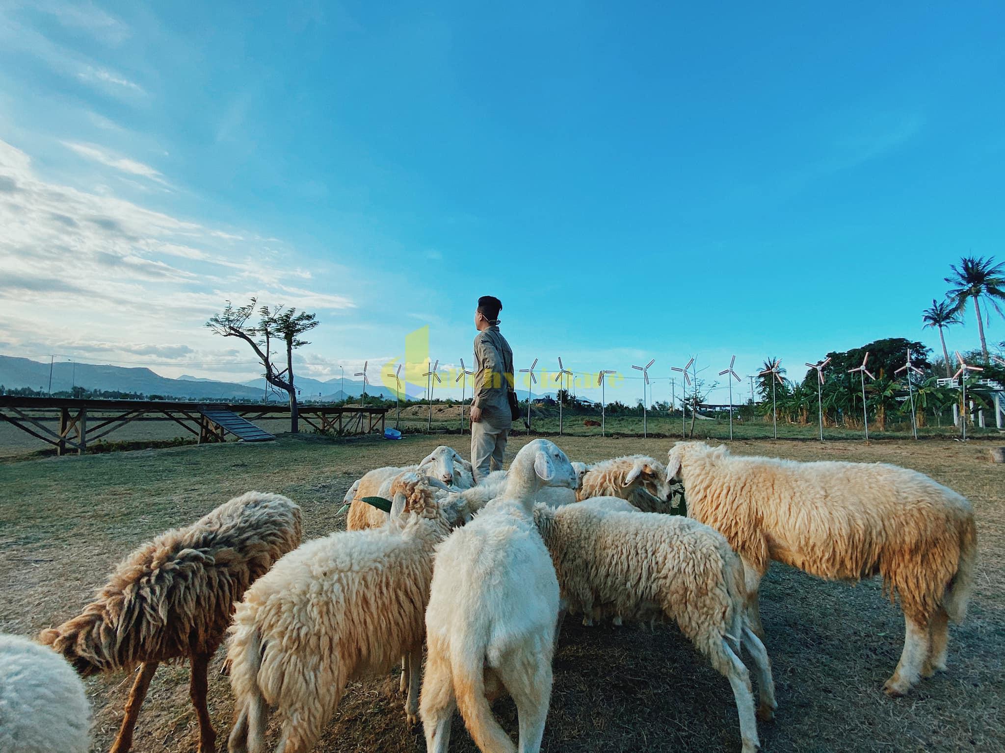 ng-cừu Check in 7 địa điểm nổi bật khi đến Hang Rái - Ninh Thuận