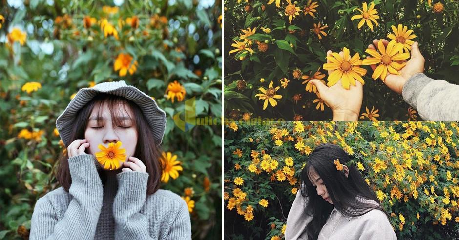 dã-quỳ Những loài hoa đẹp nhất đà lạt vào dịp cuối năm