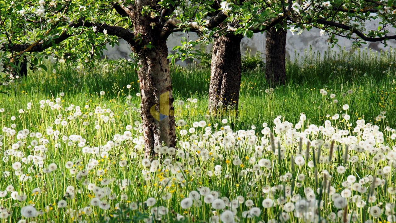 hoa-bo-cong-anh-03 Những loài hoa đẹp nhất đà lạt vào dịp cuối năm