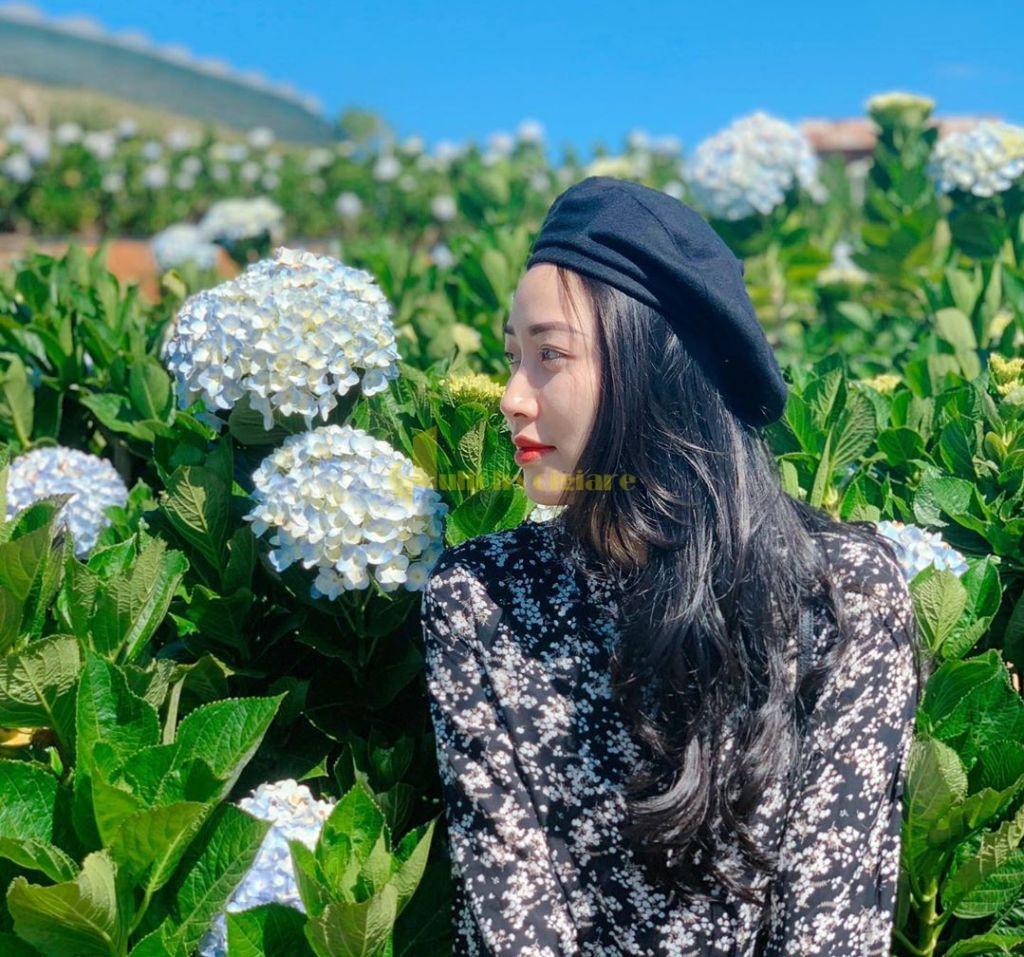 tú-cầu-1 Những loài hoa đẹp nhất đà lạt vào dịp cuối năm