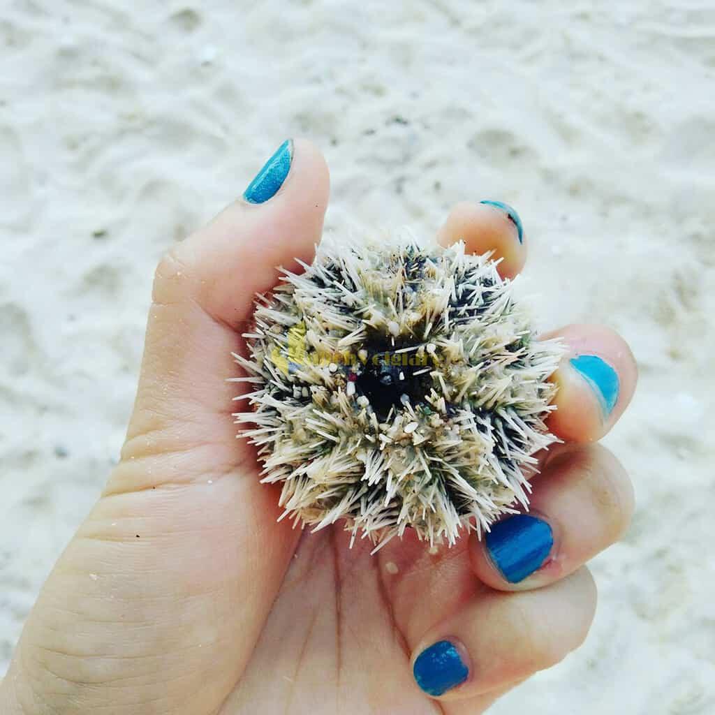 choi-gi-o-con-dao-GUU Trời nắng nóng quá rồi , Khám phá Côn Đảo biển xanh , cát trắng , nắng vàng thôi nào ?