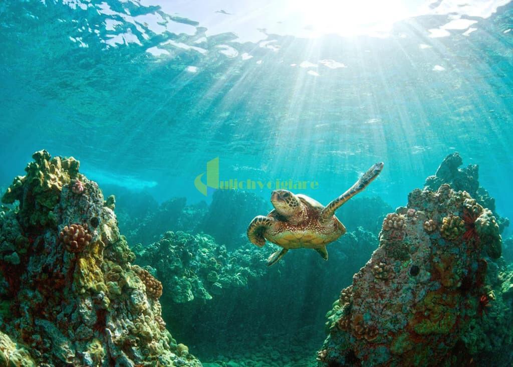 choi-gi-o-con-dao-internet6 Trời nắng nóng quá rồi , Khám phá Côn Đảo biển xanh , cát trắng , nắng vàng thôi nào ?