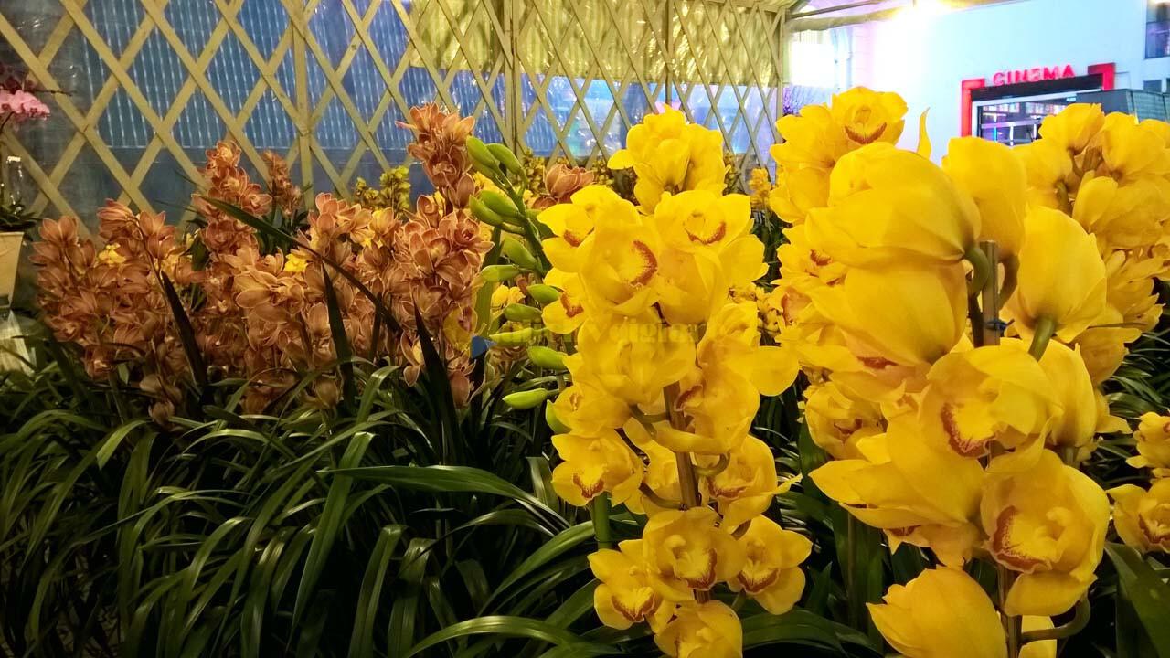 """hoa-dia-lan Top 15 loài hoa """"xinh đẹp"""" tại Đà Lạt"""