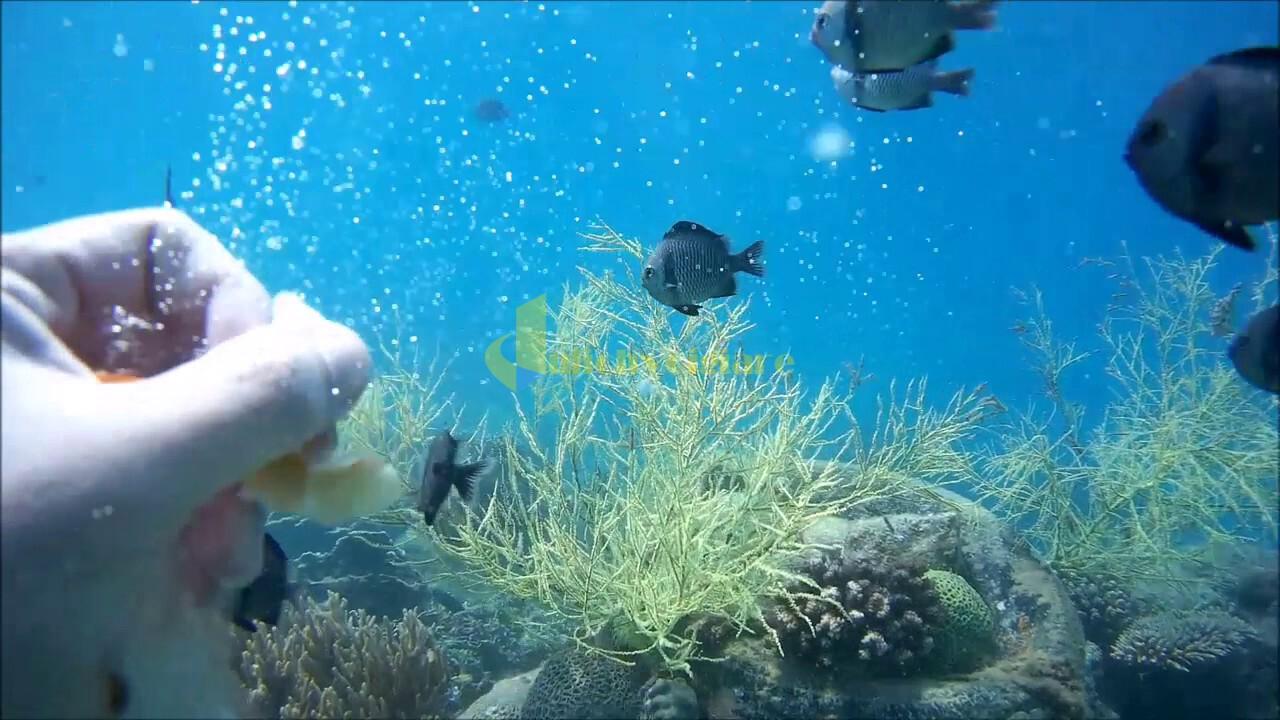 lặn-ngắm-san-hô Review du lịch Hòn Mun - 1 trong 4 Vịnh đẹp ở Nha Trang
