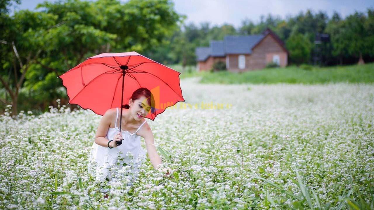 """tam-giac-mach Top 15 loài hoa """"xinh đẹp"""" tại Đà Lạt"""